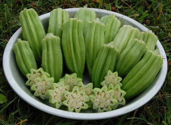 Узнать все о бамии: что за растение, описание и свойства овоща