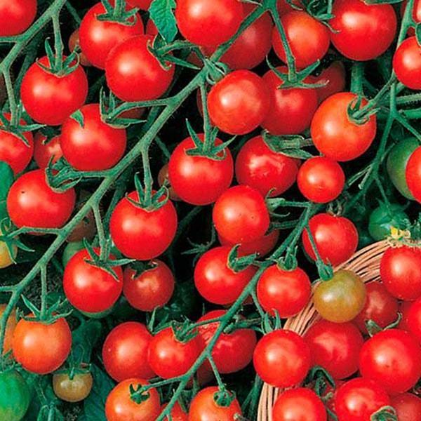 Красная гроздь: описание сорта томата, характеристики помидоров, посев