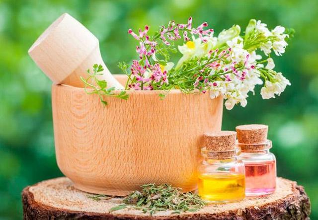 Что отличает кинзу от кориандра: есть ли разница между этими растениями