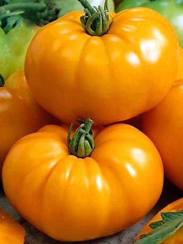 Оранжевый гигант: описание сорта томата, характеристики помидоров, посев