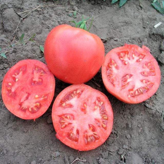 Пуговка: описание сорта томата, характеристики, агротехника помидоров