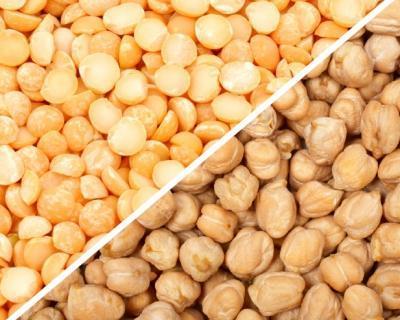 Все о горохе нут: чем турецкий (узбекский) горох отличается от обычного, как выращивать
