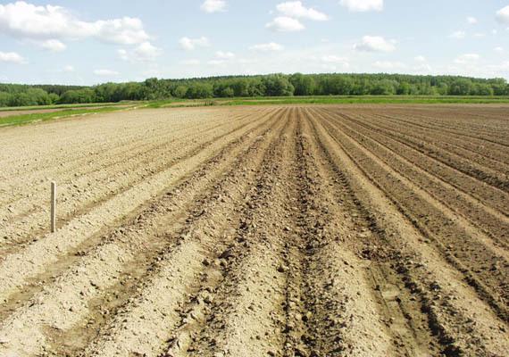 Жуковский: семенной сорт картофеля, характеристики, агротехника