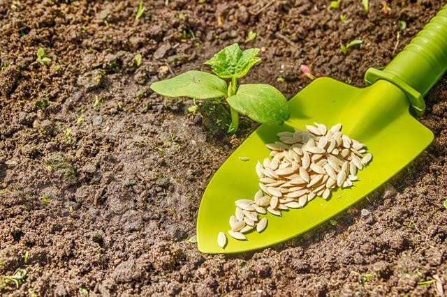 Об огурцах f1: описание и характеристики сортов, посадка, уход, выращивание