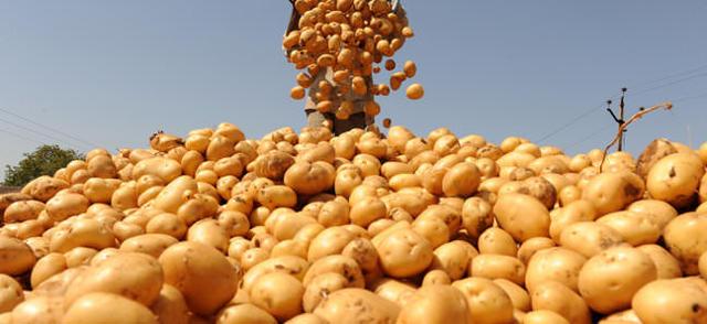 Как сажать картофель в гребни вручную: глубина, описание технологии