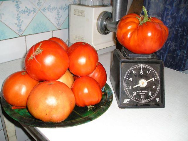 Сахарный гигант: описание сорта томата, характеристики помидоров, посев