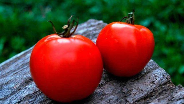 Ляна: описание сорта томата, характеристики помидоров, выращивание