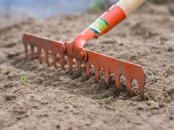 Почва для чеснока: характеристики и кислотность почвы для чеснока