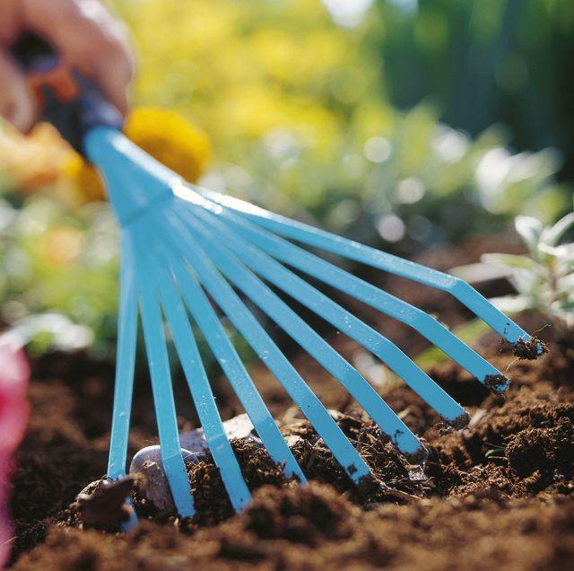 Все о выращивании базилика лимонное чудо: как посадить и ухаживать за растением