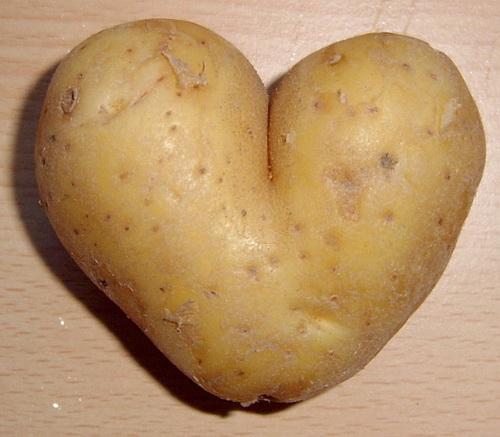 Какие предшественники у картофеля, можно ли сажать огурцы после картошки