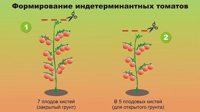 Космонавт Волков: описание сорта томата, характеристики помидоров, посев