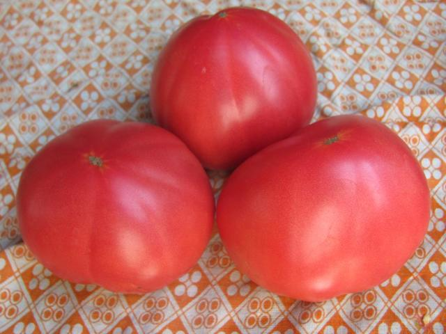 Бабушкин секрет: описание сорта томата, характеристики помидоров, посев