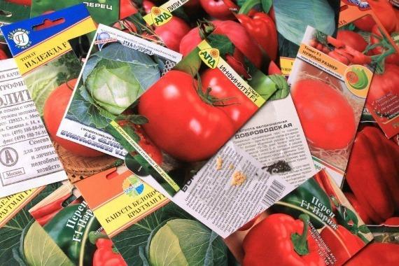 Как вырастить помидоры дома: выращивание томатов и уход за рассадой