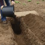 Все о выращивании спаржи в открытом грунте: как сажать и выращивать