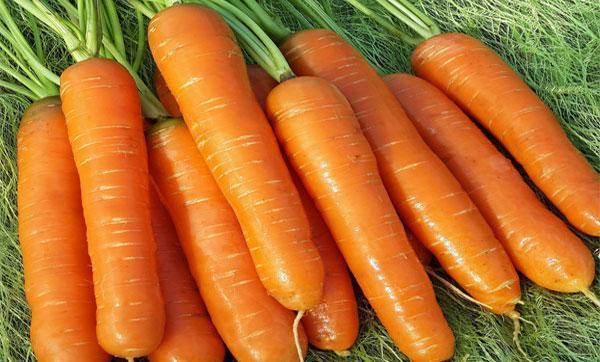 Нантская 4: описание сорта моркови, характеристики, агротехника