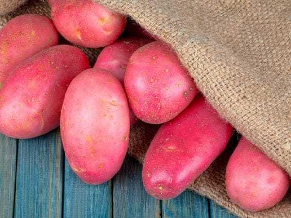 Алена: описание семенного сорта картофеля, характеристики, агротехника