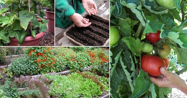 Можно ли сажать огурцы после томатов: как правильно посадить на следующий год