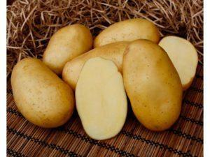 Фелокс: описание семенного сорта картофеля, характеристики, агротехника