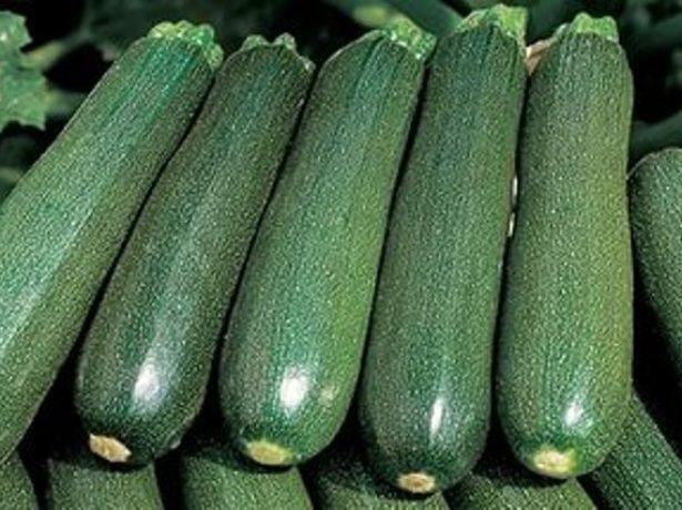 О кабачке Цукеша: описание сорта, посадка, уход, выращивание