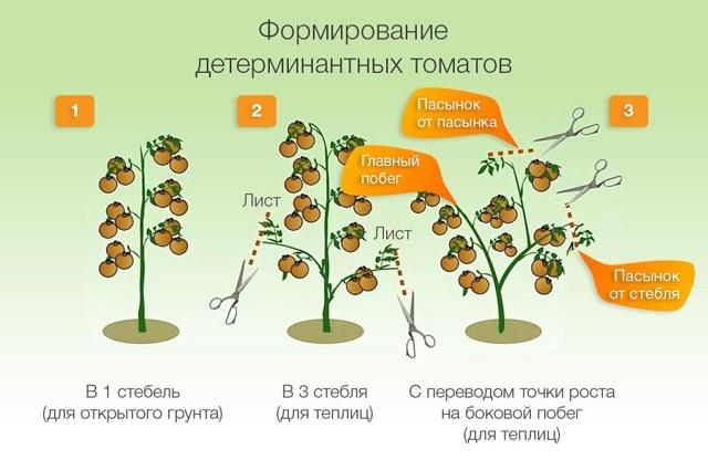 О томате Хлыновский: описание сорта, характеристики помидоров, посев