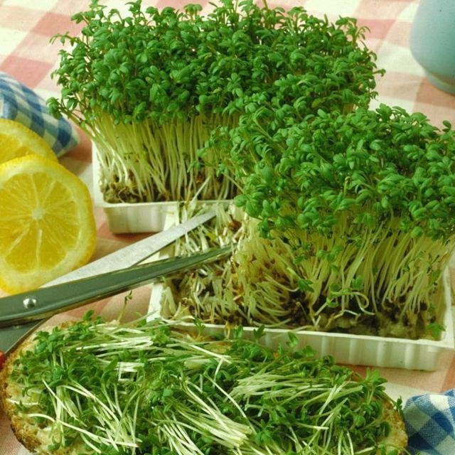 Все о водяном кресс салате: что за сорт, внешний вид, описание, выращивание