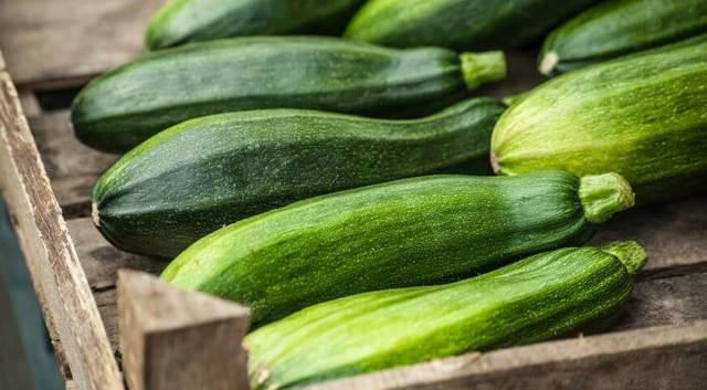 Все о цукини: как выглядит, чем отличается от кабачка, характеристики сортов, уход