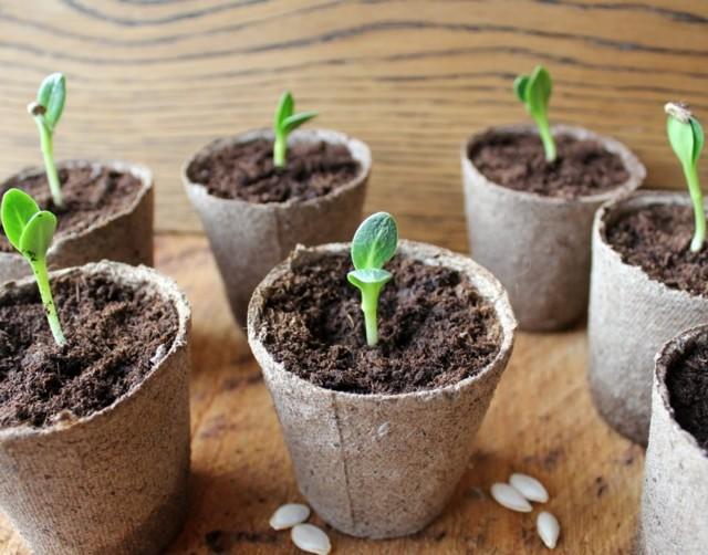 О том, как выращивать огурцы дома: где сажать, как ухаживать, секреты роста