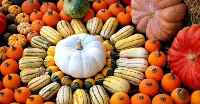 О лучших сортах тыквы для посадки в открытом грунте: что сажать в Подмосковье