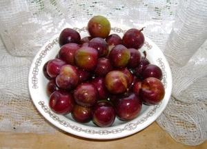 О сливово-вишневом гибриде: описание, скрещивание сорта, выращиние, уход