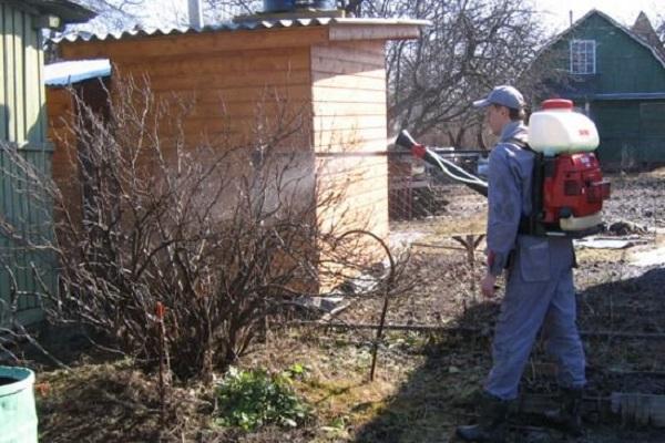 Как пересаживать крыжовник весной на другое место: последовательность работ
