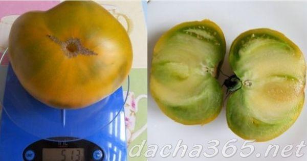 Малахитовая шкатулка: описание сорта томата, характеристики помидоров