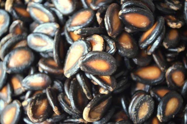 О посадке арбузов в открытый грунт: на какое расстояние правильно высаживать