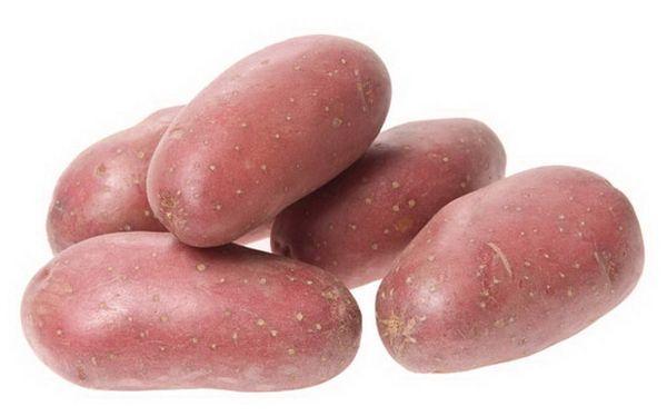 Родриго: описание семенного сорта картофеля, характеристики, агротехника