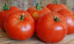 О томате Лабрадор: описание сорта, характеристики помидоров, посев