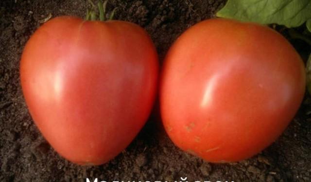Малиновый звон: описание сорта томата, характеристики помидоров, посев