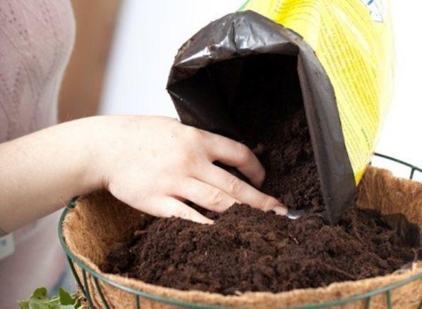 Посадка мяты и размножение семенами, черенками, делением куста