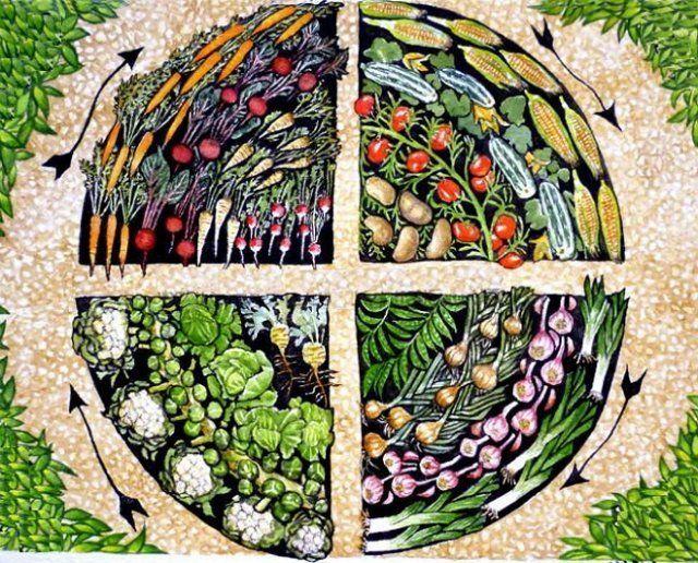 О предшественниках огурцов в открытом грунте (сидератах): севооборот, культурооборот