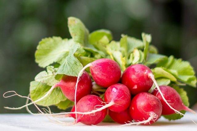 Все о редиске: что за растение, как выглядит, происхождение, тип плода