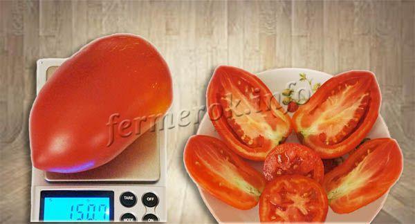 Сибирская тройка: описание сорта томата, характеристики помидоров, посев