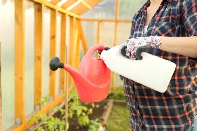 Как посадить помидоры на рассаду правильно дома, как выращивать томаты из рассады