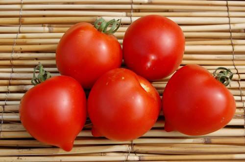 Юбилейный Тарасенко: описание сорта томата, характеристики помидоров