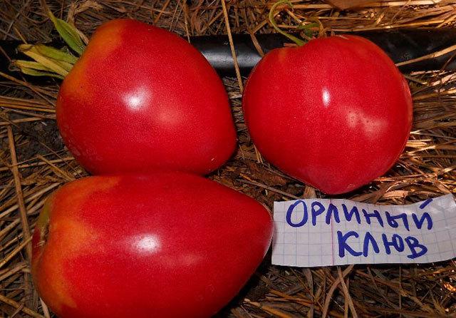 Орлиный клюв: описание сорта томата, характеристики помидоров, посев
