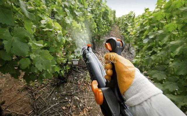 Как подкормить виноград весной, после цветения, летом: внекорневая подкормка, опрыскивание