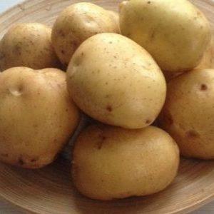 Каратоп: описание семенного сорта картофеля, характеристики, агротехника