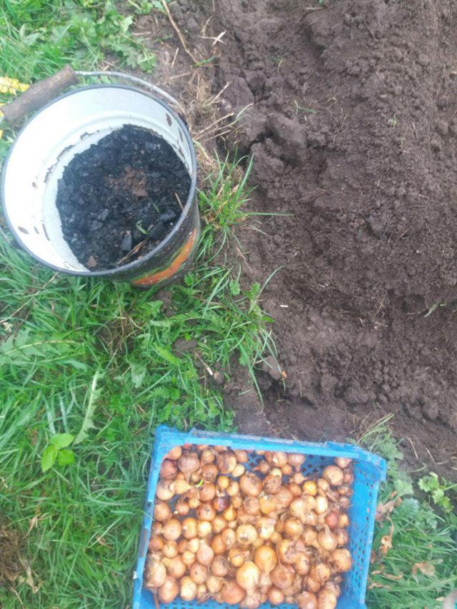 Как сажать лук и морковь, схема посадки на одной грядке, время, советы