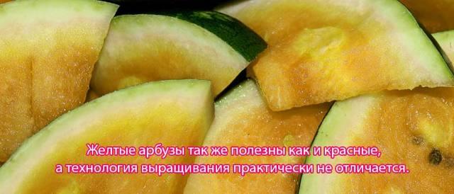 Все о желтом арбузе: что за сорт, с чем скрещен, почему с желтой мякотью