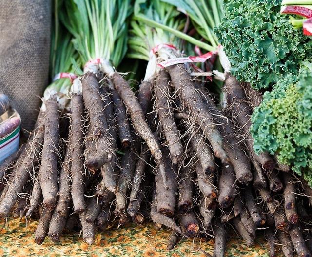 Скорцонера: выращивание из семян, уход, сбор урожая, агротехника
