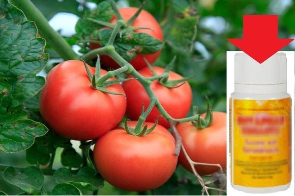 Янтарная кислота для помидор: применение, полив, опрыскивание в теплице, дозировка