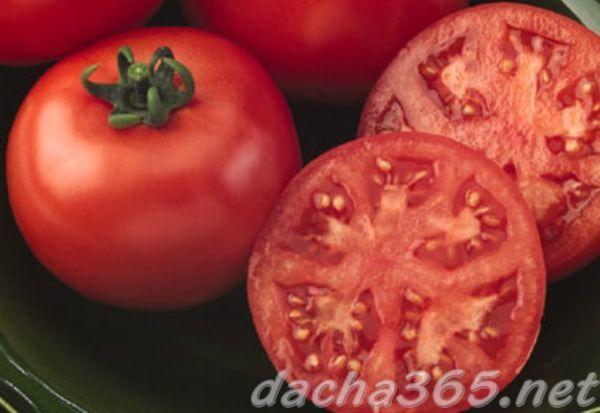 Евпатор: описание сорта томата, характеристики помидоров, выращивание